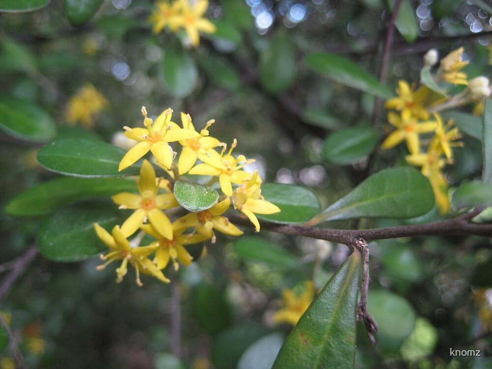 frangipani cousin by knomz