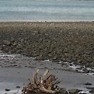 lonely driftwood by knomz