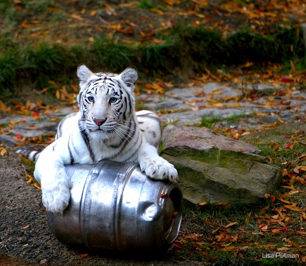 Tiger Portrait by Lisa G. Putman