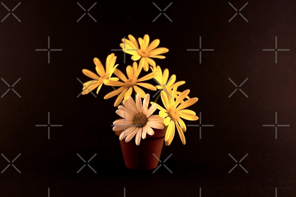 White and Yellow Daisies in a Red Pot by Buckwhite
