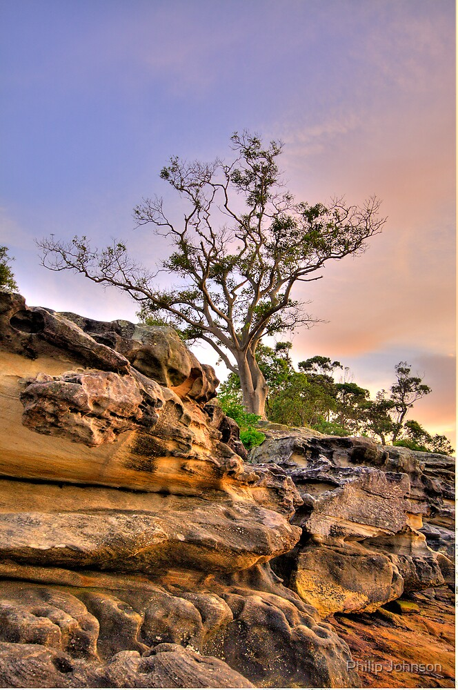 Reach For The Sky - Balmoral Beach - The HDR Series by Philip Johnson