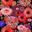 Orange Daisy by theminx1