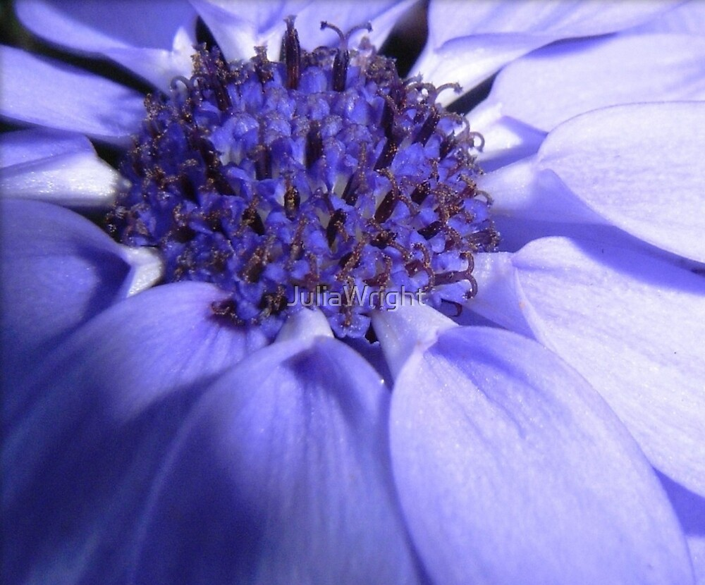 The secret of blue by JuliaWright