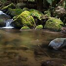 Taggerty River Cascades by Vicki Moritz