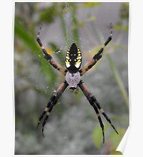 Garden Spider Poster
