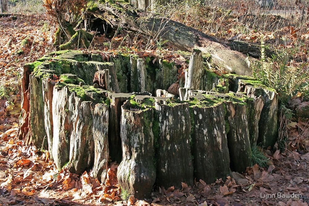 """""""Western Red Cedar Stump"""" by Lynn Bawden"""