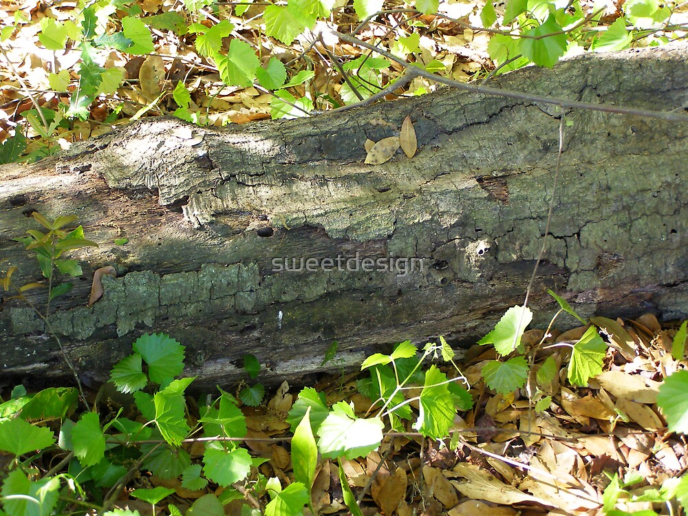 Just an old log by sweetdesign