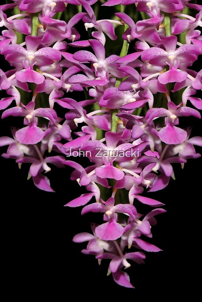 Cascading Orchids by John Zawacki