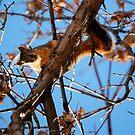 I'm Watching You! by Pamela Hubbard