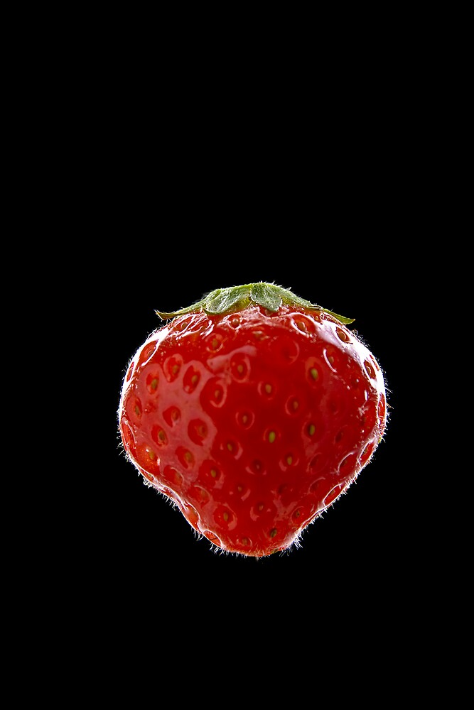 Berry by Andreas Reinhold