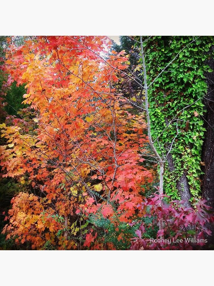 Autumn's Vibrancy by Rodwilliams