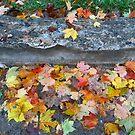 Rainy Autumn Morning by Rodney Lee Williams