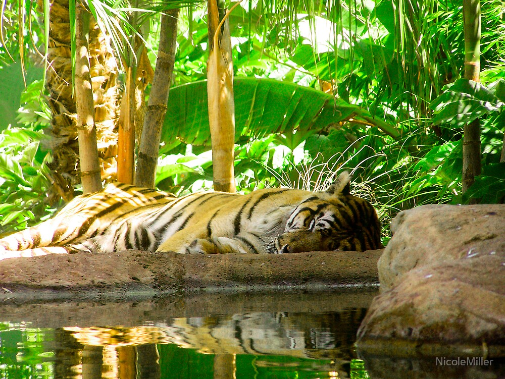 reflecting tiger by NicoleMiller