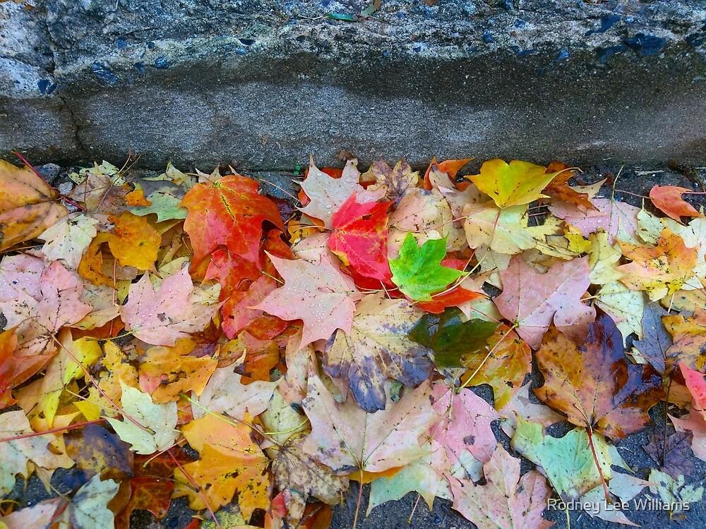 Rainy Autumn Morning 2 by Rodney Williams