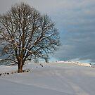 Alpine tree by mamba