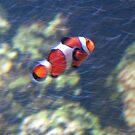 Nemo by evapod