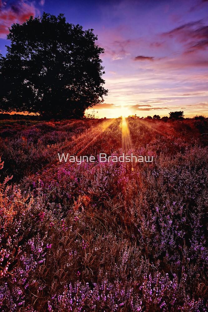 Dunwich Heath 5. by Wayne Bradshaw