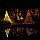 Christman Garden 5 by Rodney Lee Williams