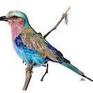 Realistic Bird Drawing by Arterized