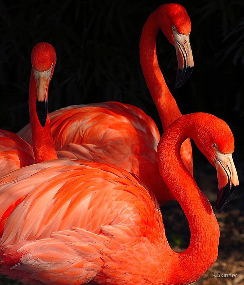 Flamingo Triple Play by KSkinner