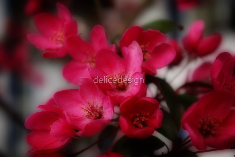 Dreamy Blossoms by delicedesign