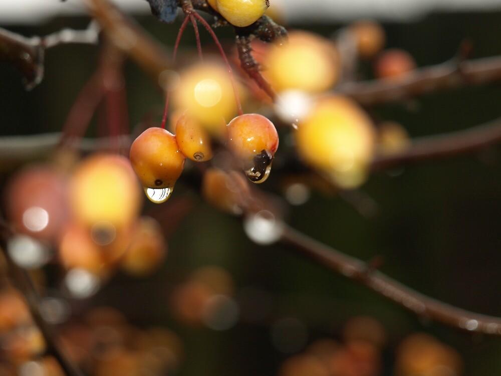 Berries 1 by Maria  Palumbo