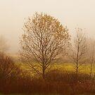 Misty by KathleenRinker
