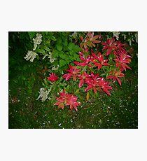 Wierd Flowers Photographic Print