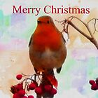 Robin Christmas Card. by Forfarlass