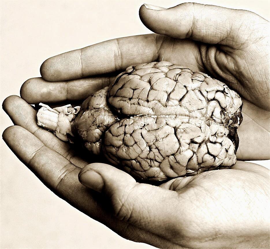 Brain2 by clare scott