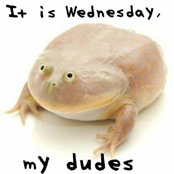 It Is Wednesday My Dudes Meme Reddit Frog Me_IRL Me IRL MeIRL by superfly360