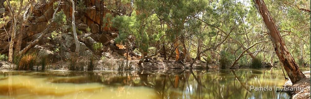 Wilpena Creek by Pamela Inverarity