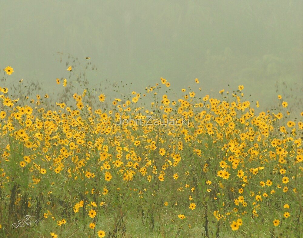 Field of Black-eyed Susan Flowers by John Zawacki