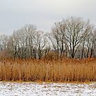 Winter landscape with reed an trees by xophotography