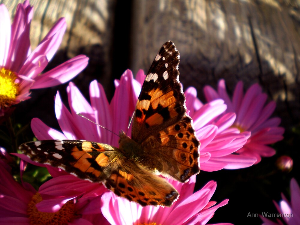 Butterfly Wishes by Ann  Warrenton