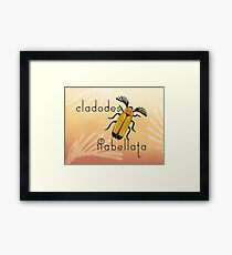 Cladodes flabellata beetle Framed Print