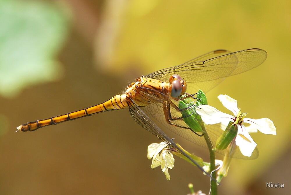 Dragonfly by Nirsha