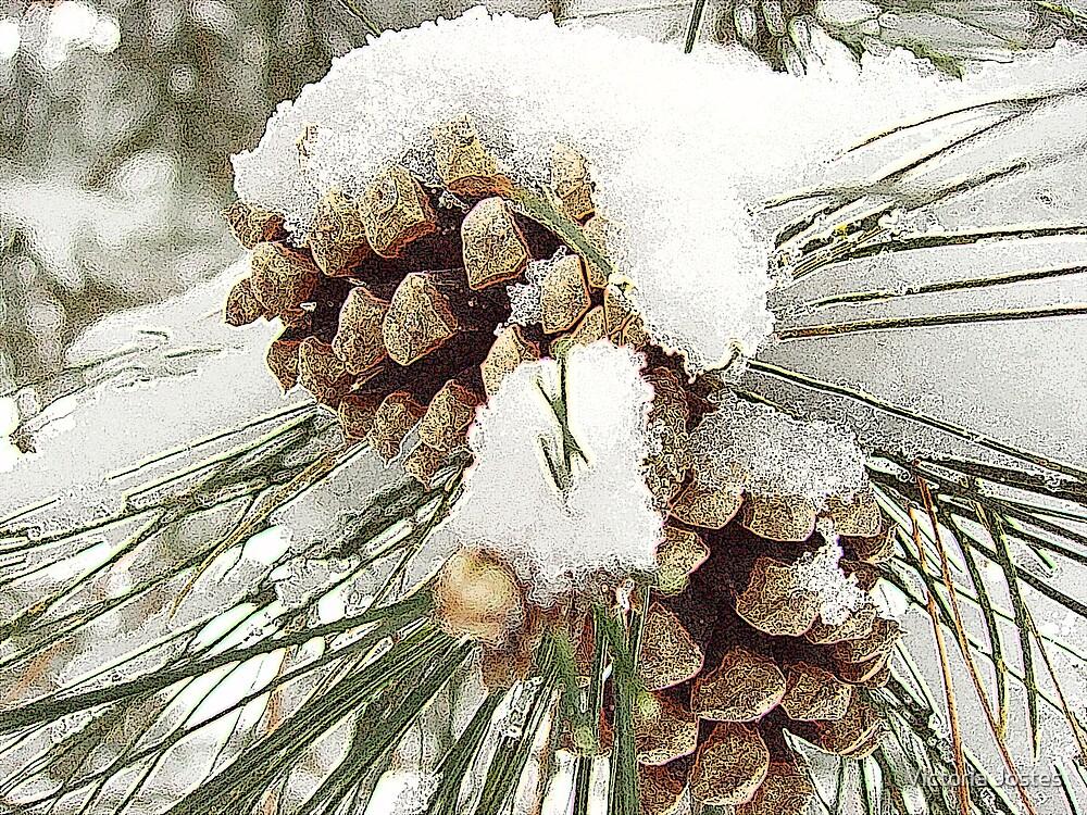 Pine Cones in Snow by Victoria Jostes