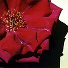 Red flower by evapod
