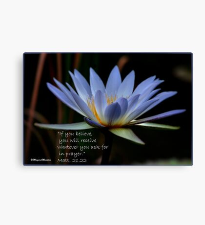 THE BLUE WATERLILY – Nymphaea nouchall Canvas Print