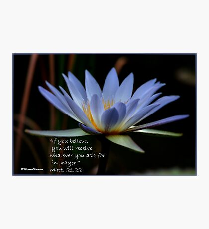 THE BLUE WATERLILY – Nymphaea nouchall Photographic Print