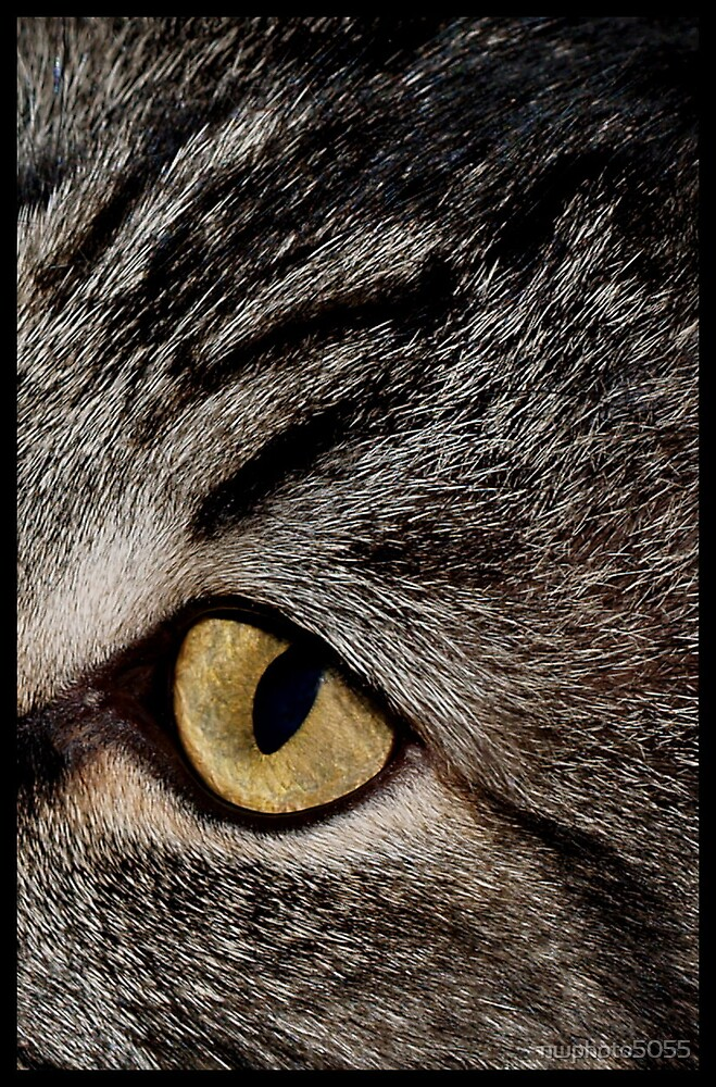 Eye Of The Cat by nwphoto5055