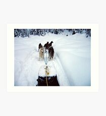 Dog Sledding Art Print