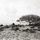 Mangroves by somewherestudio