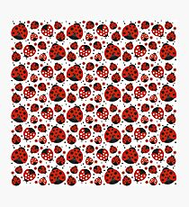 Ladybugs and Red Flowers Photographic Print