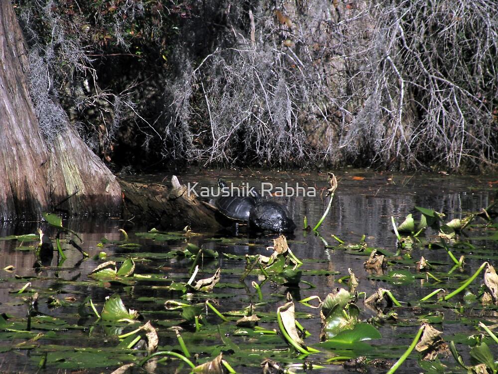 The turtles by Kaushik Rabha