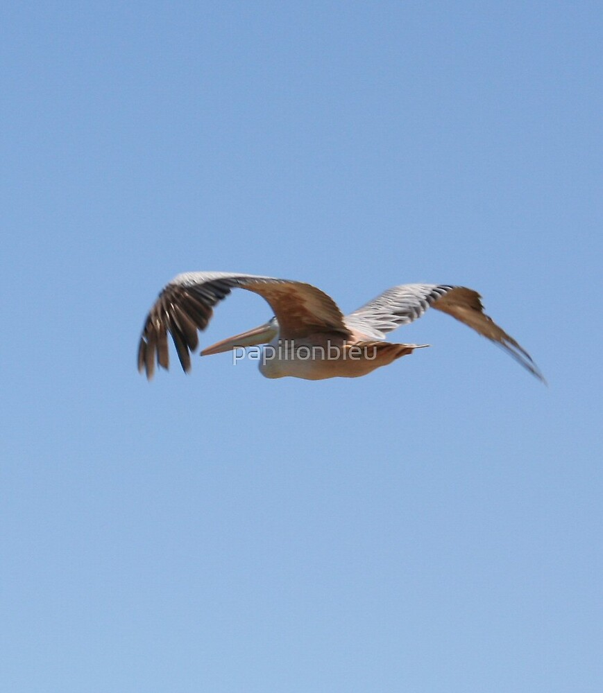 Pelican Crossing by Pamela Jayne Smith