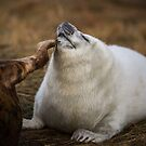 Mum scratching her white seal pup by Kerto Elvin