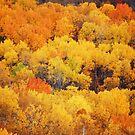Fall in the garden by zachdier