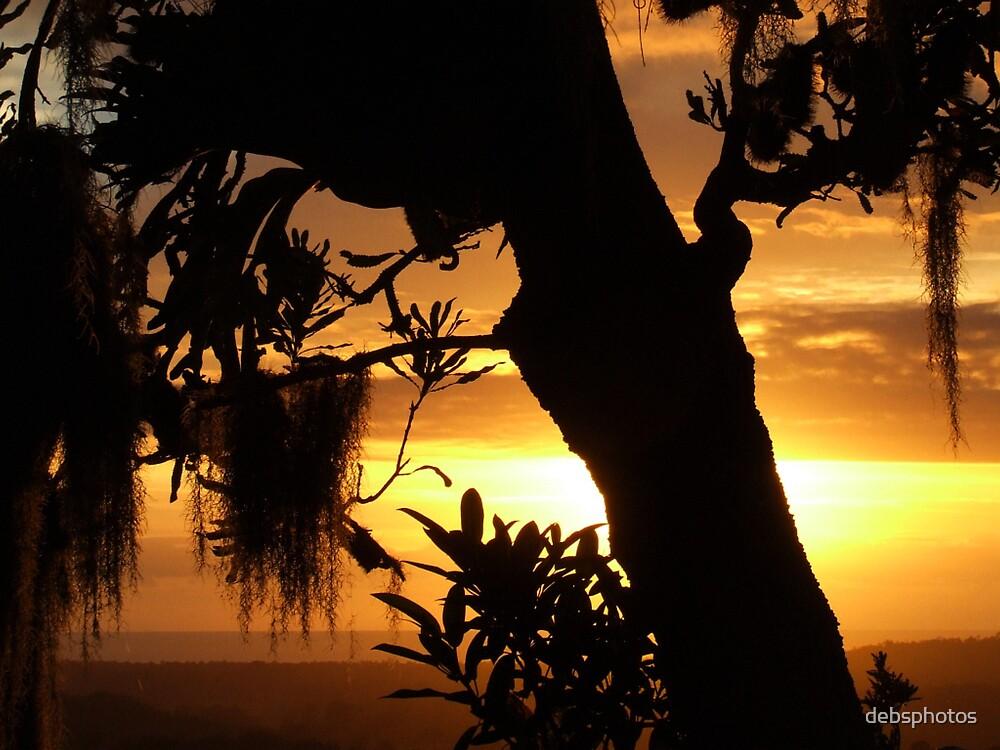 """Banksia Morn"" by debsphotos"